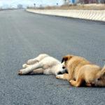 交通事故被害者にならないために、道路インフラの問題点にもっと目を向けるべきだ